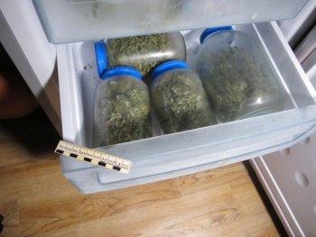 Марихуана в холодильнике приход как от марихуаны