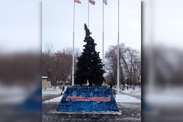 Жителей Заводского возмутила кривая праздничная елка, которую установили в парке