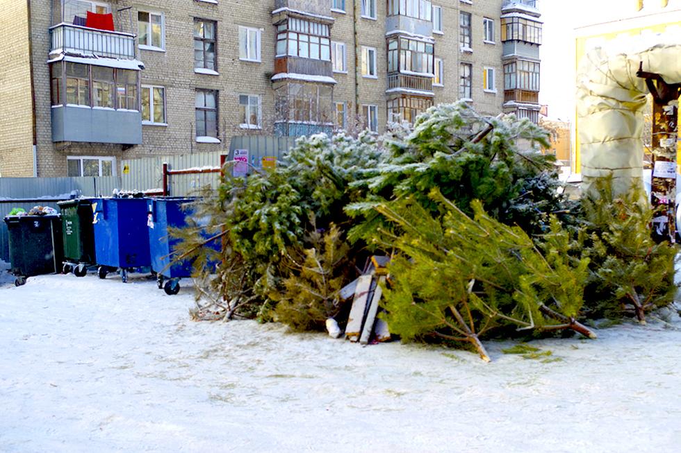 контактируют, однако выброшенная елка фото развода
