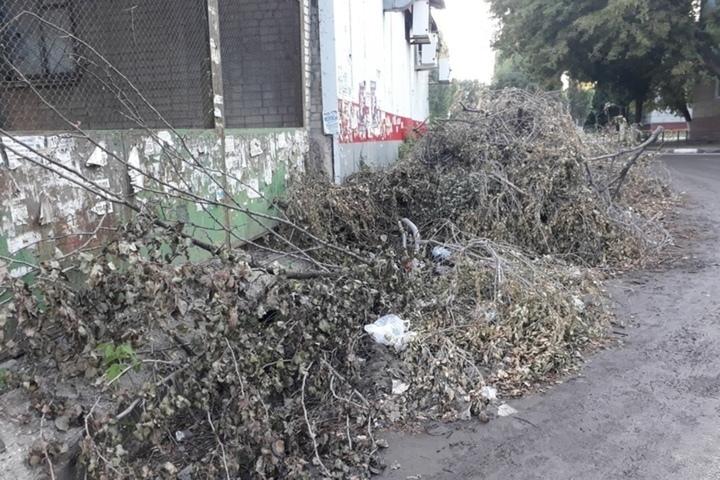 Вывоз мусора. В думе поспорили о том, кто должен убирать ветки из дворов